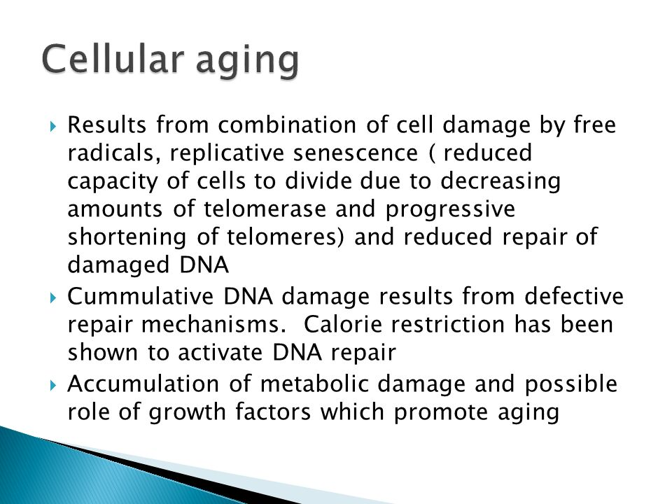 Results from combination of cell damage by free radicals, replicative senescence ( reduced capacity of cells to divide due to decreasing amounts of telomerase and progressive shortening of telomeres) and reduced repair of damaged DNA  Cummulative DNA damage results from defective repair mechanisms.