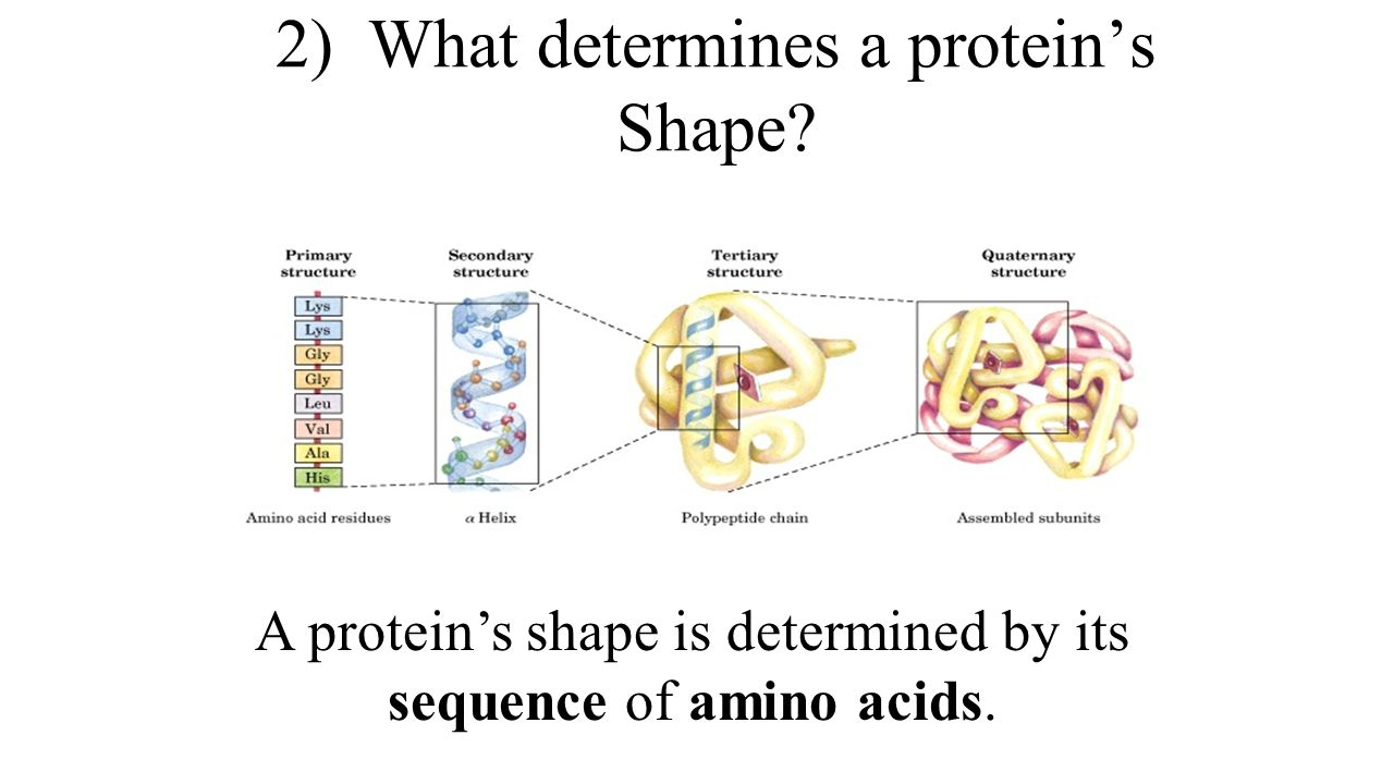 protein synthesis review worksheet Say it with dna: protein synthesis worksheet: practice pays student handout having studied the process by which dna directs the synthesis of proteins, you should be ready to decode.