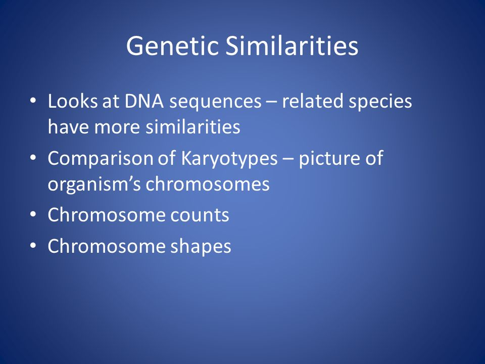 Genetic Similarities Looks at DNA sequences – related species have more similarities Comparison of Karyotypes – picture of organism's chromosomes Chromosome counts Chromosome shapes