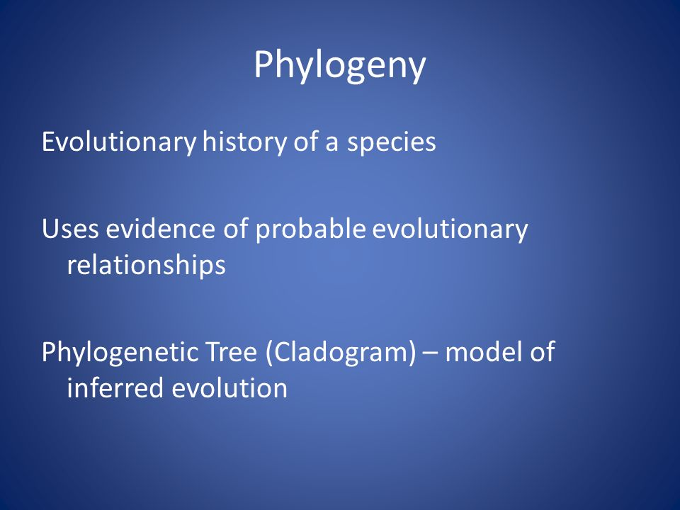 Phylogeny Evolutionary history of a species Uses evidence of probable evolutionary relationships Phylogenetic Tree (Cladogram) – model of inferred evolution