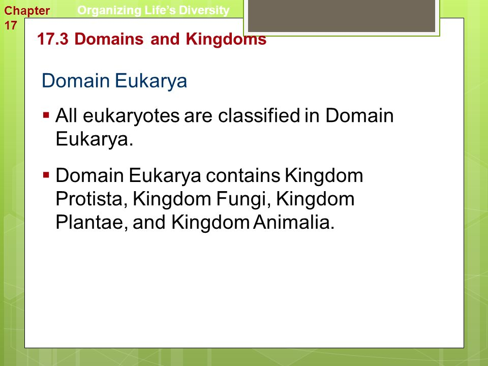 Domain Eukarya  All eukaryotes are classified in Domain Eukarya.