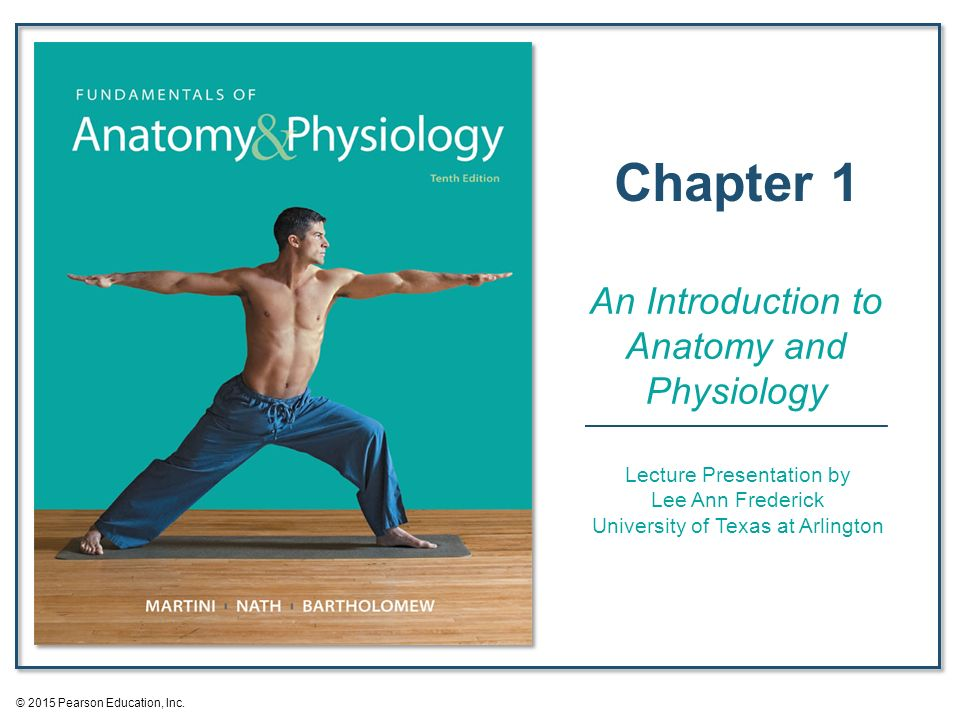 Fein Fundamentals Of Anatomy And Physiology 3rd Edition ...