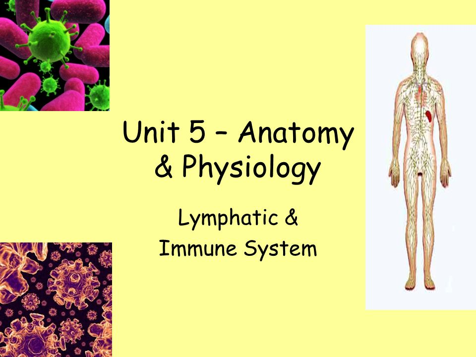 Unit 5 – Anatomy & Physiology Lymphatic & Immune System. - ppt download
