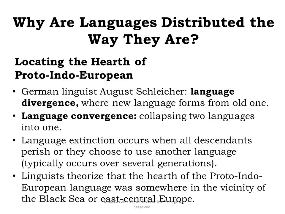 what role does language and language