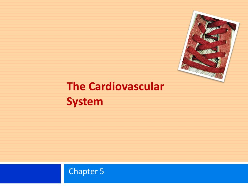 The Cardiovascular System Chapter 5. Learning Objectives Know the ...