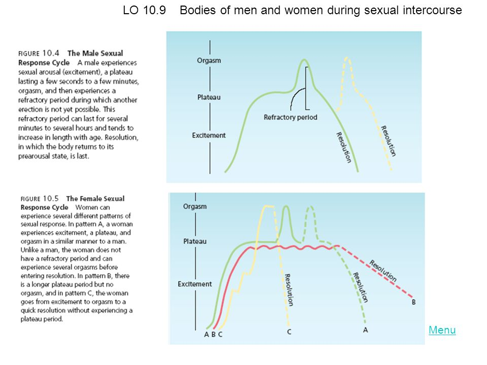Menu LO 10.9 Bodies of men and women during sexual intercourse