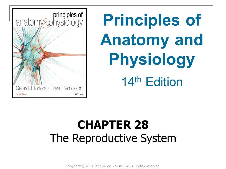 Charmant Anatomie Und Physiologie 3. Auflage Ideen - Anatomie Ideen ...
