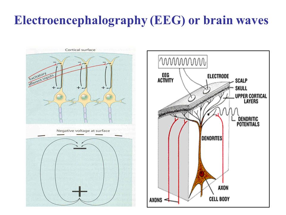 What is brain dynamics jaeseung jeong phd department of bio and 4 electroencephalography eeg or brain waves ccuart Gallery