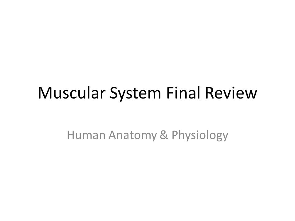 Muscular System Final Review Human Anatomy & Physiology. - ppt download