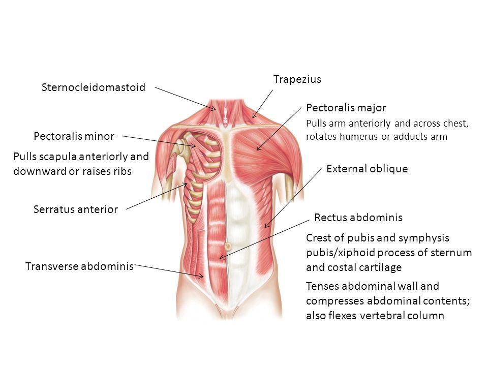 Ungewöhnlich Retroperitonealen Lymphknoten Anatomie Zeitgenössisch ...