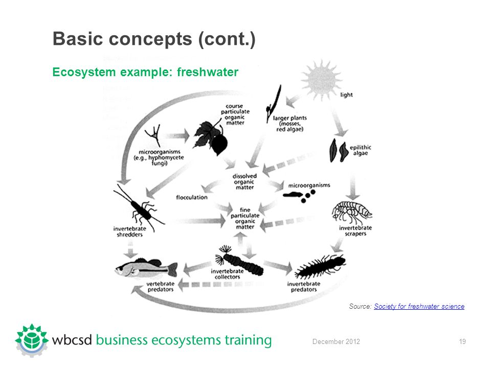 19 December 2012 Basic concepts (cont.) Ecosystem example: freshwater Source: Society for freshwater scienceSociety for freshwater science