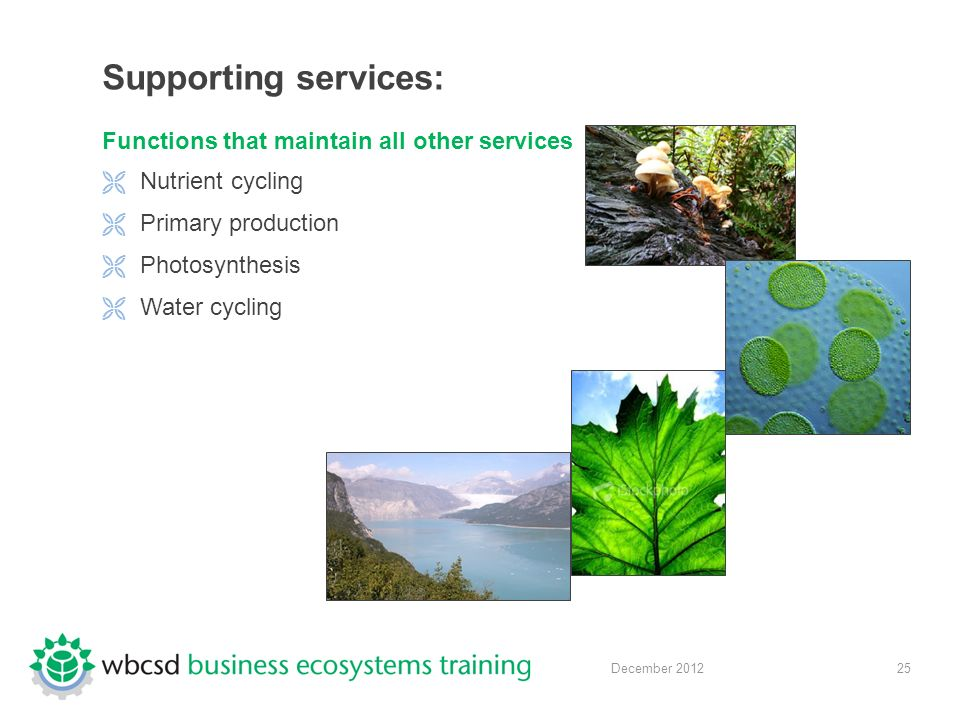 25 December 2012 Supporting services: Functions that maintain all other services  Nutrient cycling  Primary production  Photosynthesis  Water cycling