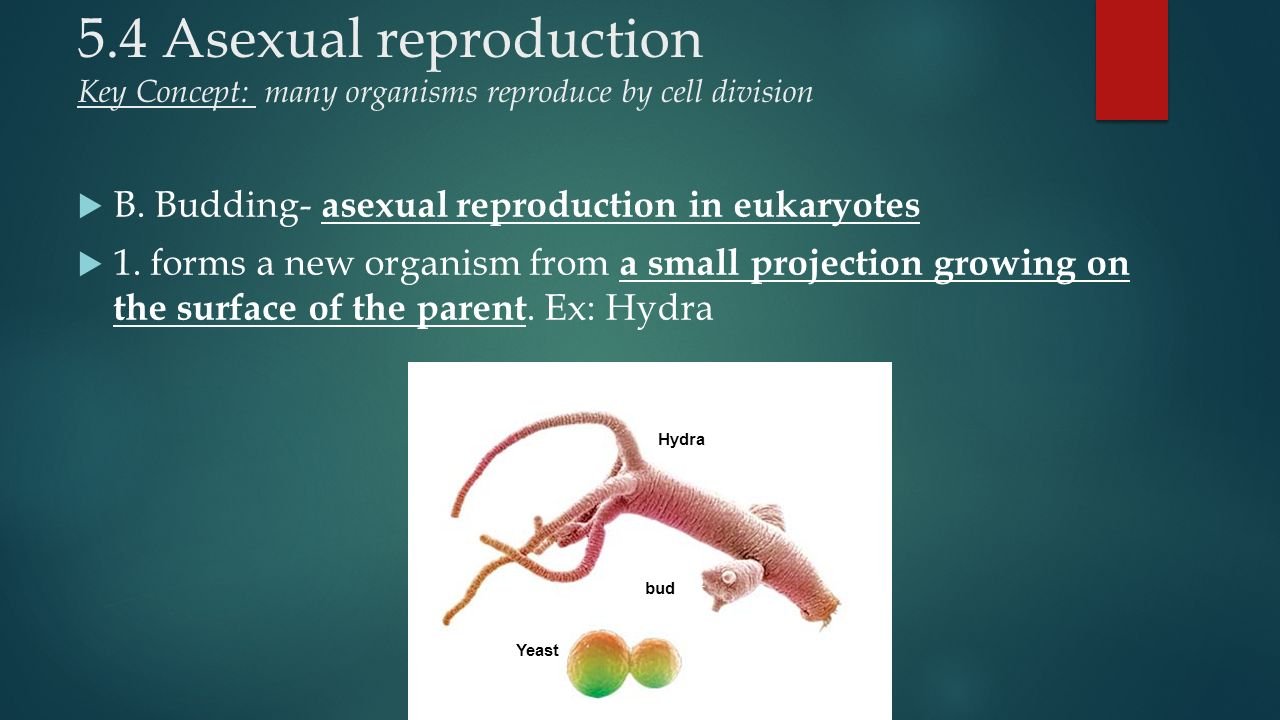 asexual reproduction stifles potential change