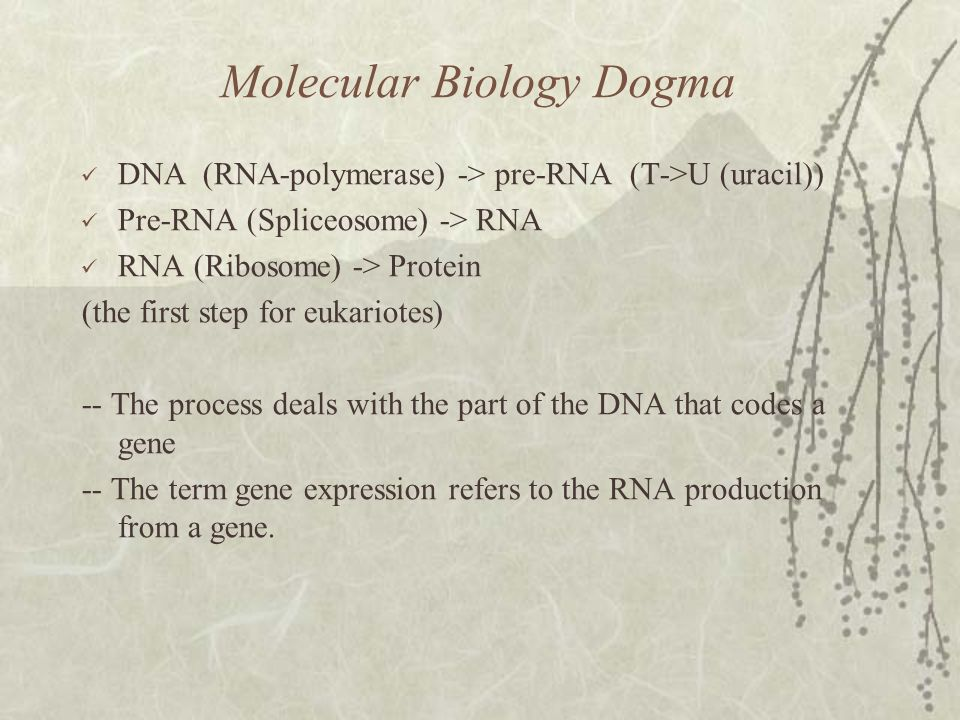 Molecular Biology Dogma DNA (RNA-polymerase) -> pre-RNA (Τ->U (uracil)) Pre-RNA (Spliceosome) -> RNA RNA (Ribosome) -> Protein (the first step for eukariotes) -- The process deals with the part of the DNA that codes a gene -- The term gene expression refers to the RNA production from a gene.