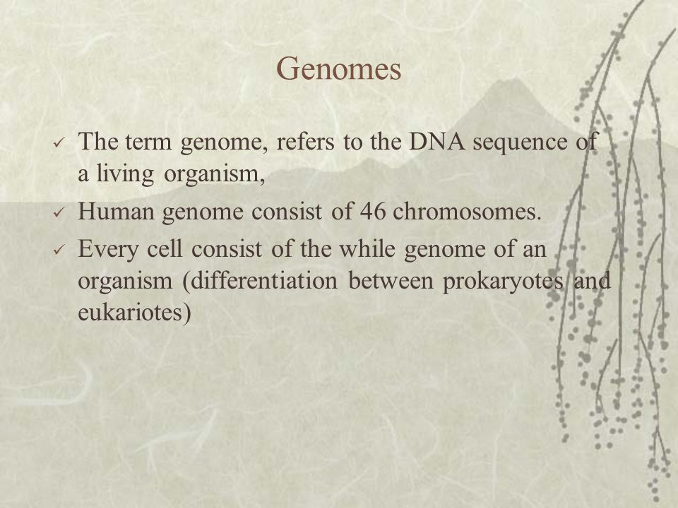 Genomes The term genome, refers to the DNA sequence of a living organism, Human genome consist of 46 chromosomes.