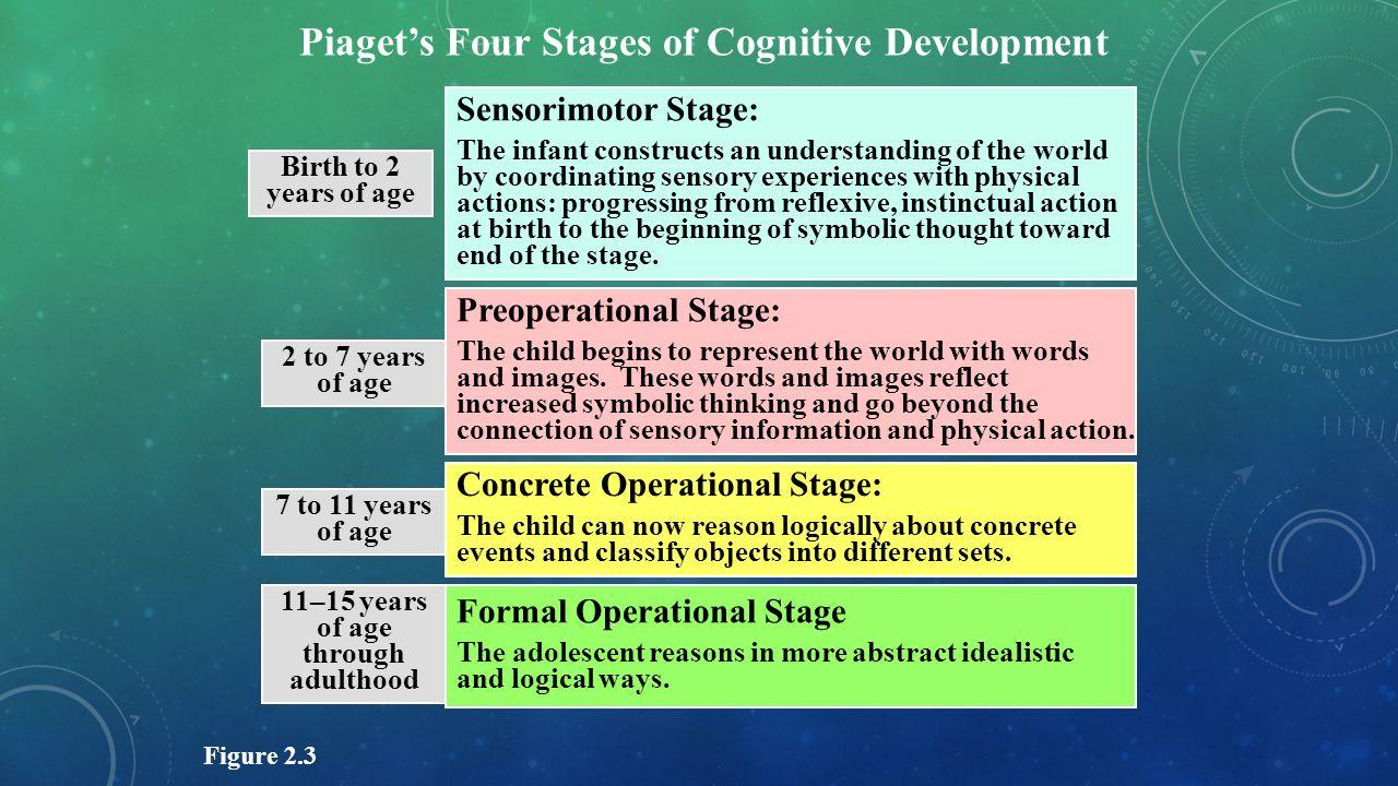 child development piagets theories