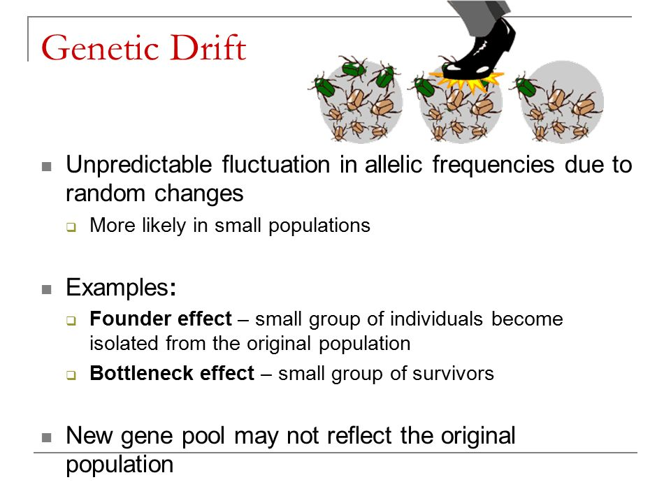 Genetic Drift Unpredictable fluctuation in allelic frequencies due to random changes  More likely in small populations Examples:  Founder effect – small group of individuals become isolated from the original population  Bottleneck effect – small group of survivors New gene pool may not reflect the original population
