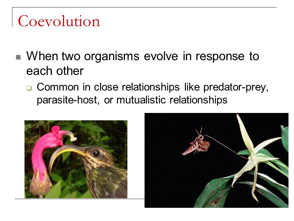 Coevolution When two organisms evolve in response to each other  Common in close relationships like predator-prey, parasite-host, or mutualistic relationships