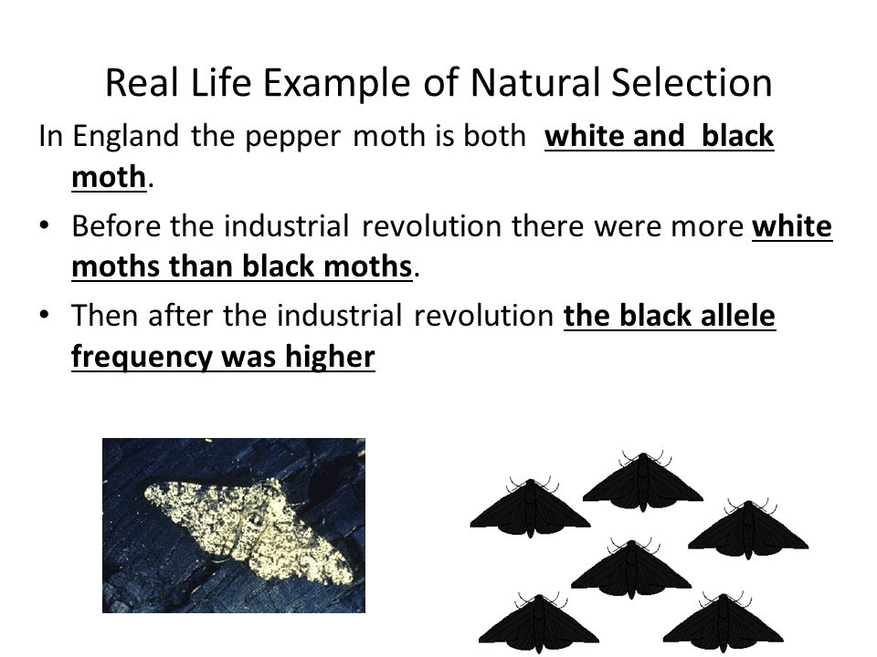 Variation and Natural Selection. Evolution Basics Changes that occur ...