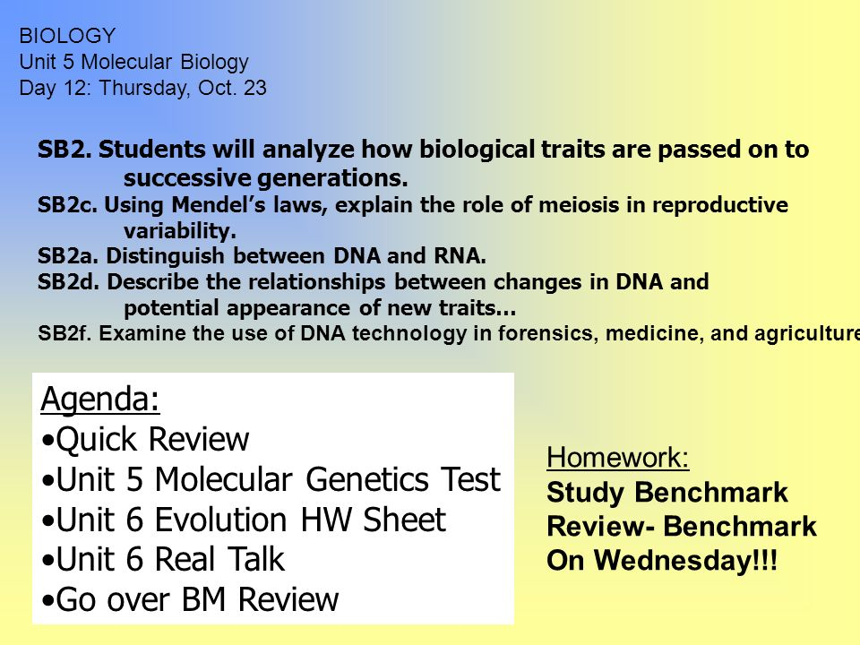 scientific analysis paper on dna replication