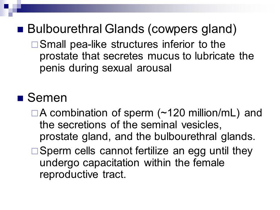 Sperm cannot fertilize an egg until they