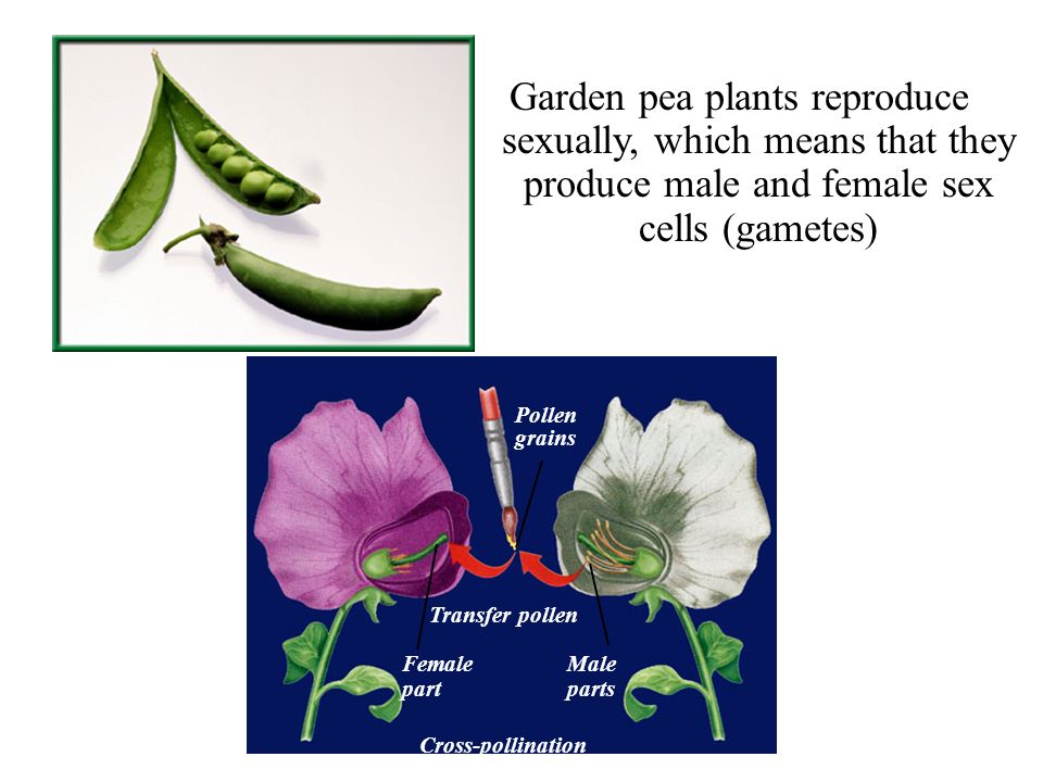 plant sexuality Flowering plants have evolved one of the most complex and sexiest life cycles on earthin fact, they have double fertilization involving.