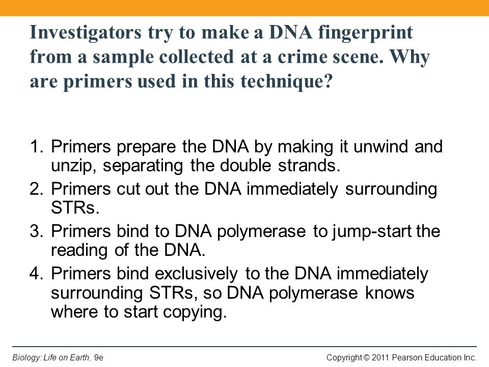 Copyright © 2011 Pearson Education Inc.Biology: Life on Earth, 9e Investigators try to make a DNA fingerprint from a sample collected at a crime scene.