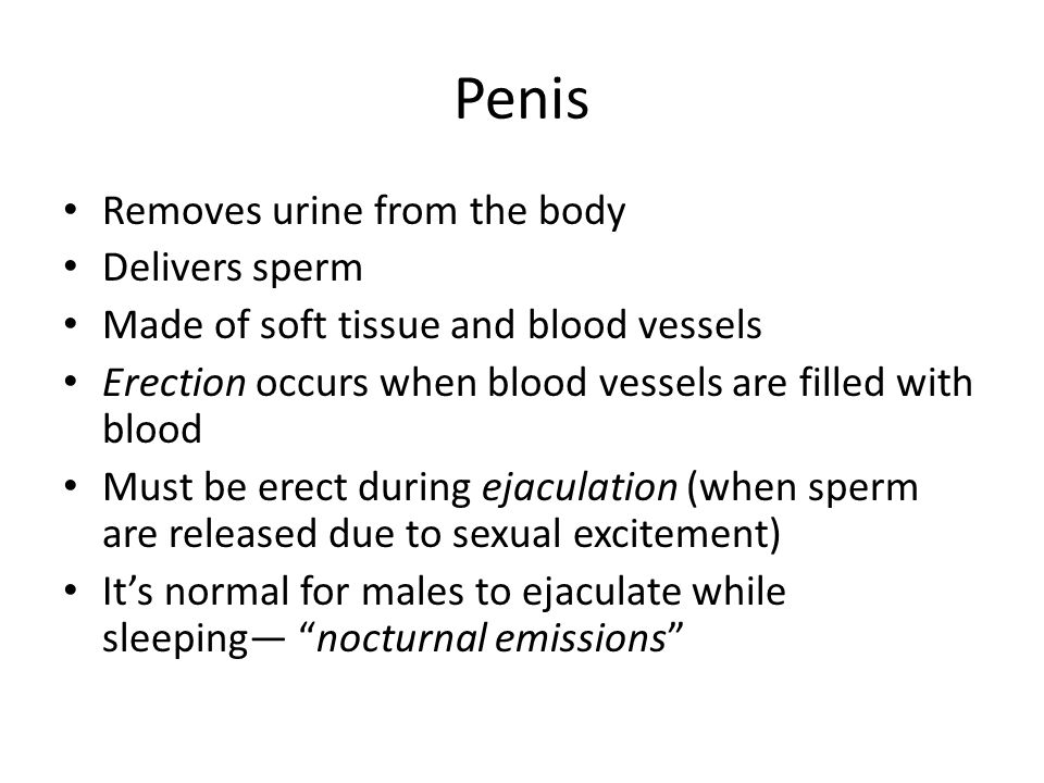 Penis Removes urine from the body Delivers sperm Made of soft tissue and blood vessels Erection occurs when blood vessels are filled with blood Must be erect during ejaculation (when sperm are released due to sexual excitement) It's normal for males to ejaculate while sleeping— nocturnal emissions