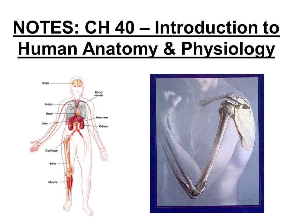 Intro To Human Anatomy Gallery - human anatomy organs diagram