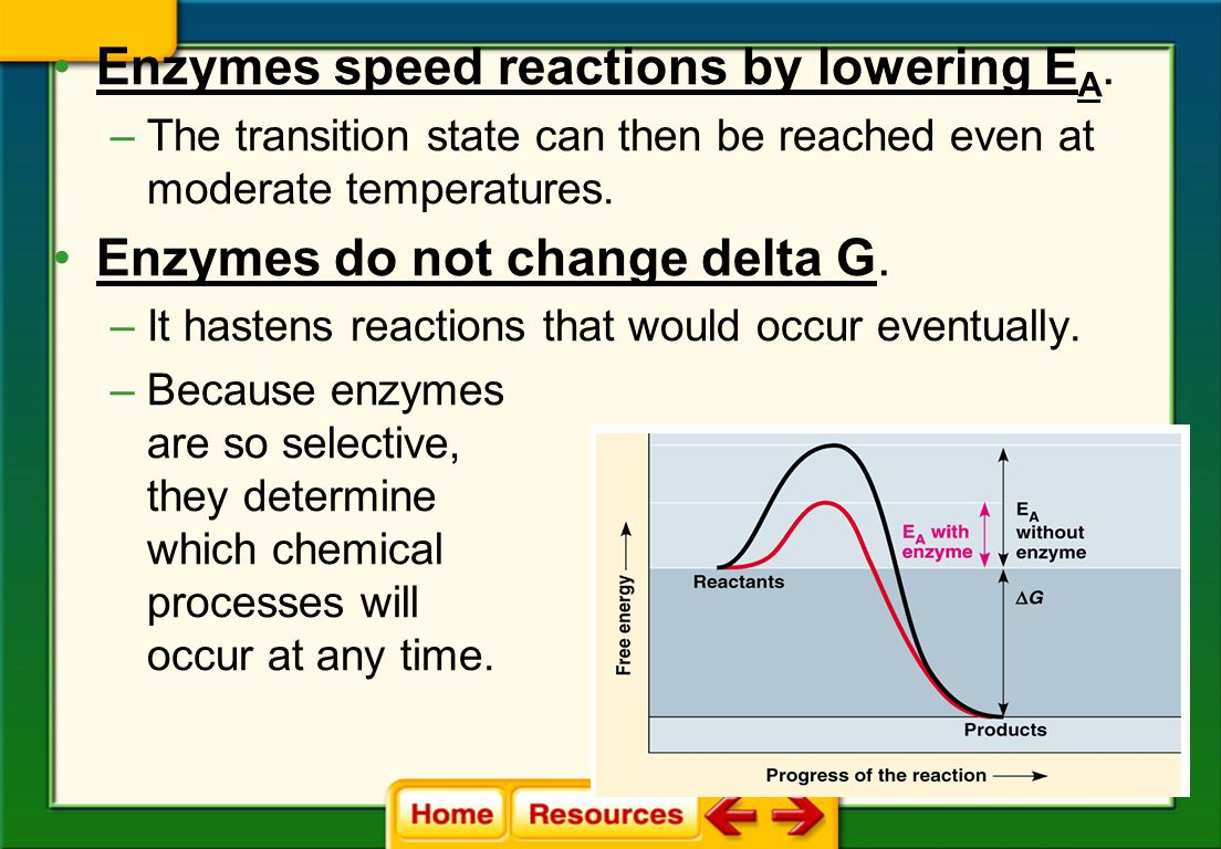 In the cell, there is not enough heat energy available to routinely achieve the activation energy needed for these reactions Enzymes are required to get these reactions to proceed