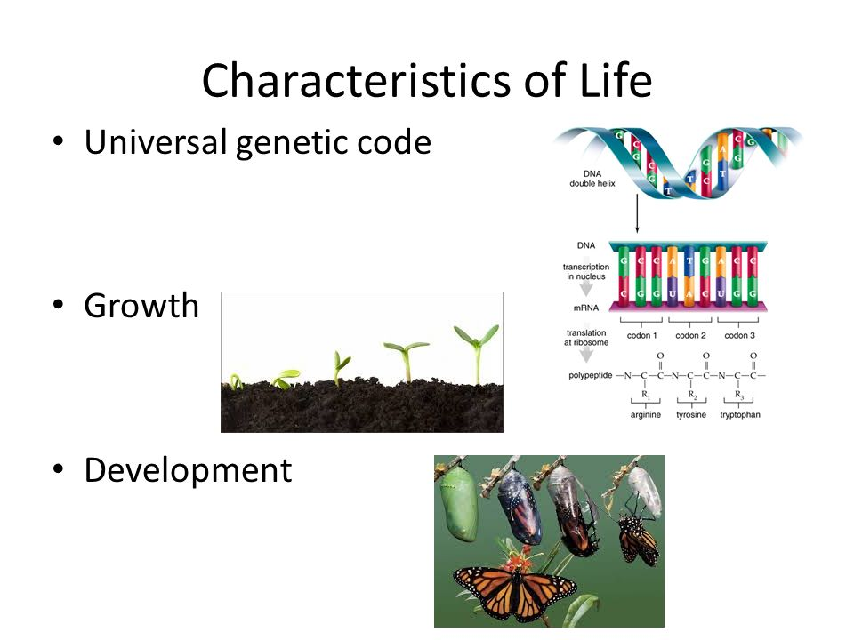a study of genetic code and the dna Looking for online definition of genetic code in the medical dictionary genetic information is coded in dna by means of and which can be used to study.