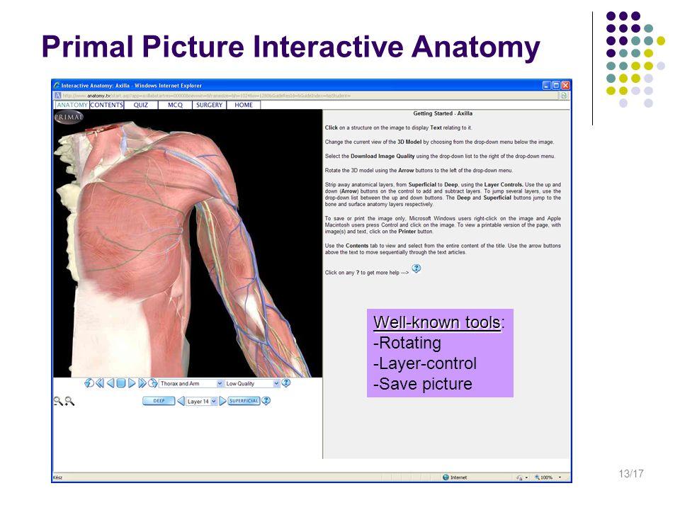 Großartig Interaktive 3d Anatomie Des Menschen Zeitgenössisch ...