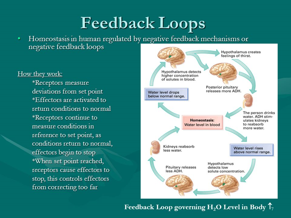 Positive Feedback Mechanism Examples ✓ Labzada Wallpaper