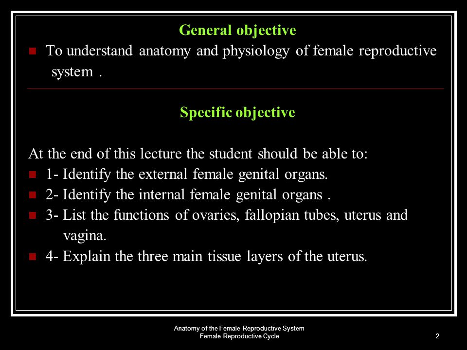 Anatomy of the Female Reproductive System Female Reproductive Cycle ...