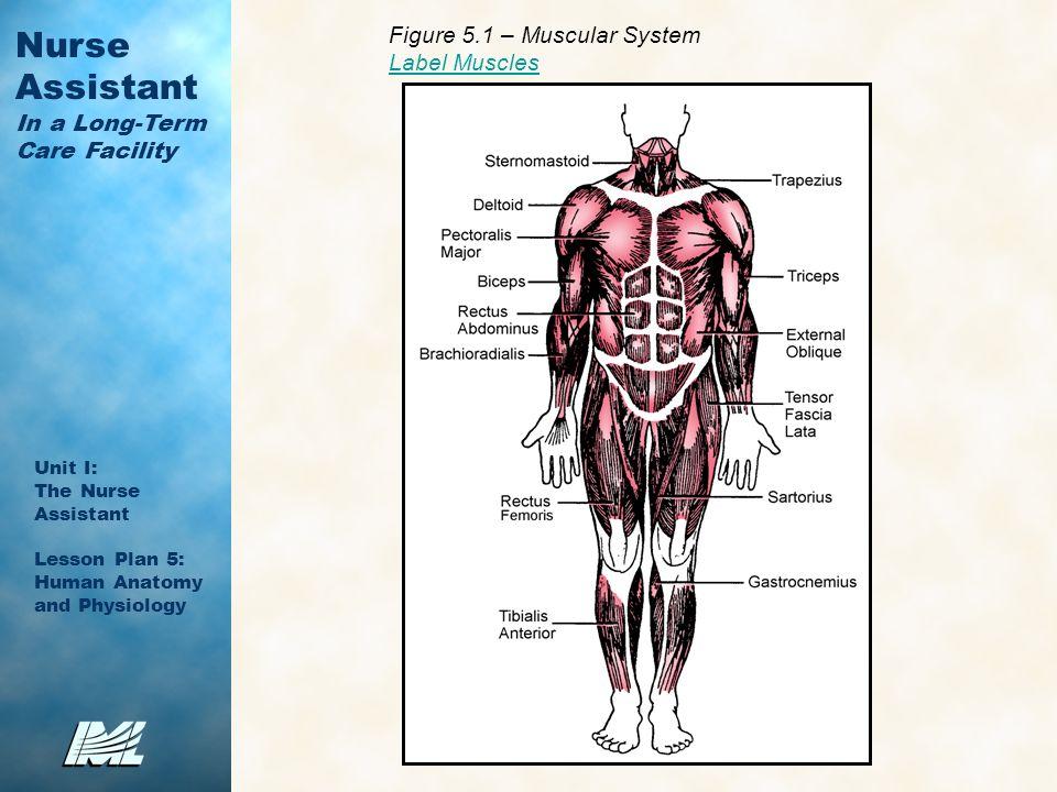 Großzügig Diagramm Weibliche Anatomie Ideen - Anatomie Ideen ...