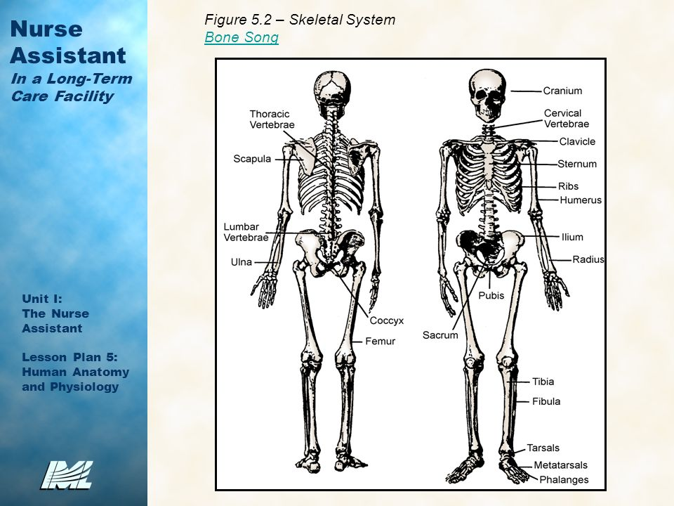 Perfect Bone Song Lyrics Anatomy Festooning - Anatomy Ideas - yunoki ...