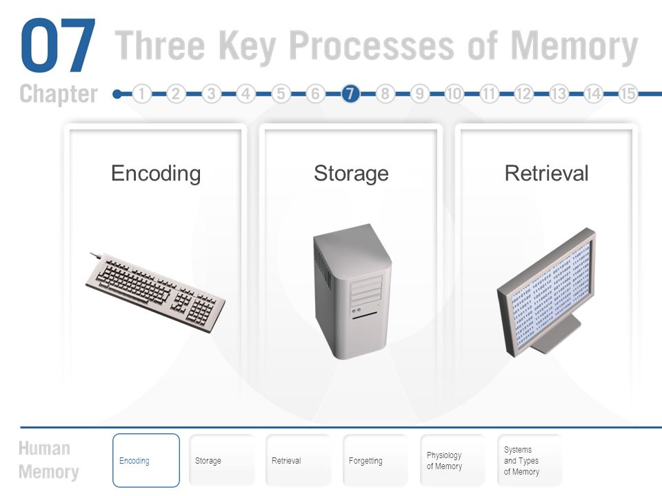 Encoding Storage Retrieval Forgetting Physiology of Memory Systems ...