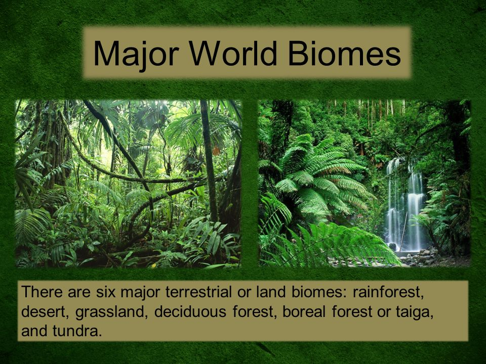 different biomes of the world essay There are quite a few different types of biomes in the world each of them has unique characteristics due to the climate and features, there are different.