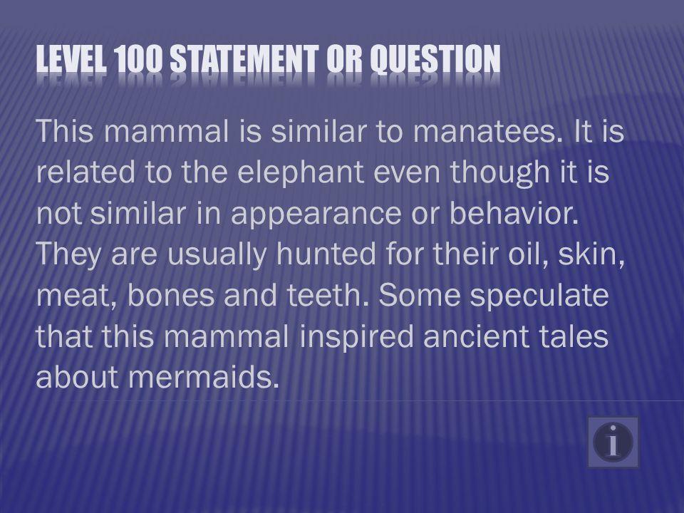 This mammal is similar to manatees.