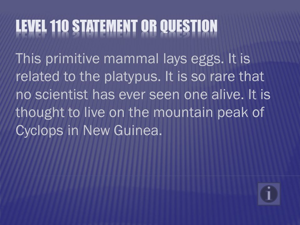 This primitive mammal lays eggs. It is related to the platypus.
