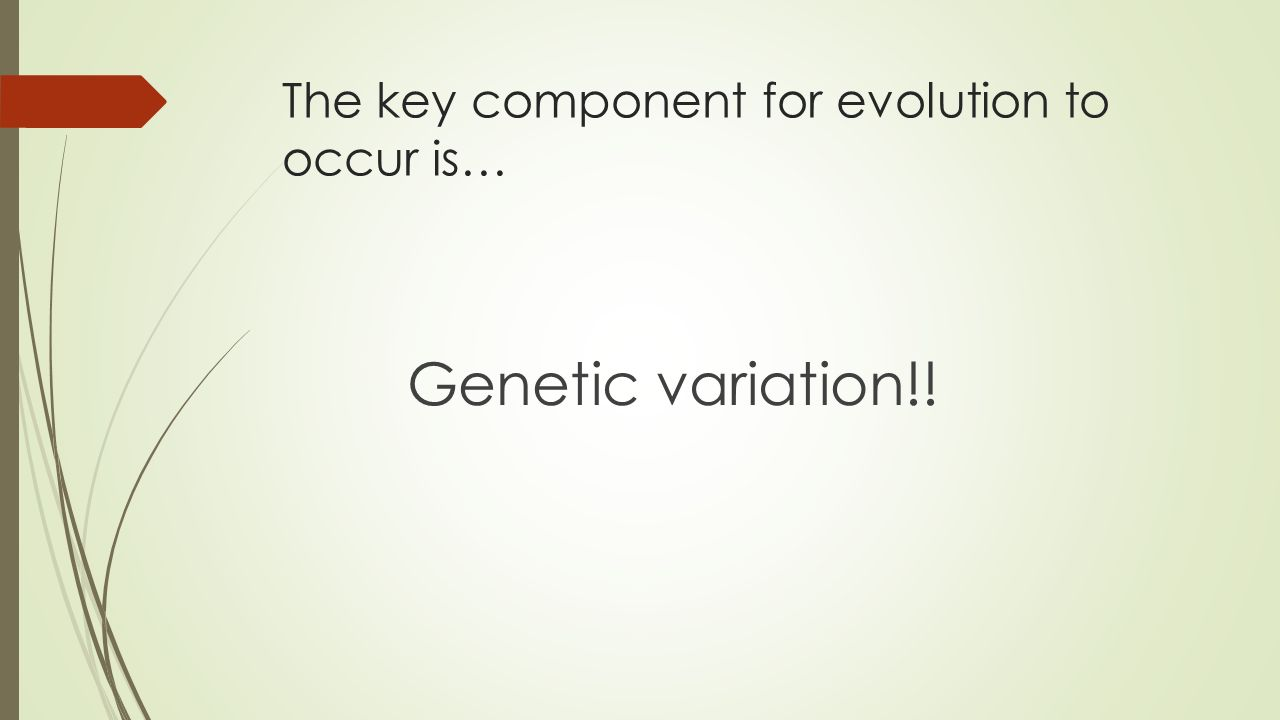 The key component for evolution to occur is… Genetic variation!!