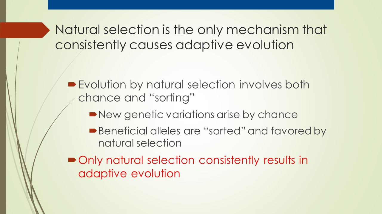  Evolution by natural selection involves both chance and sorting  New genetic variations arise by chance  Beneficial alleles are sorted and favored by natural selection  Only natural selection consistently results in adaptive evolution Natural selection is the only mechanism that consistently causes adaptive evolution