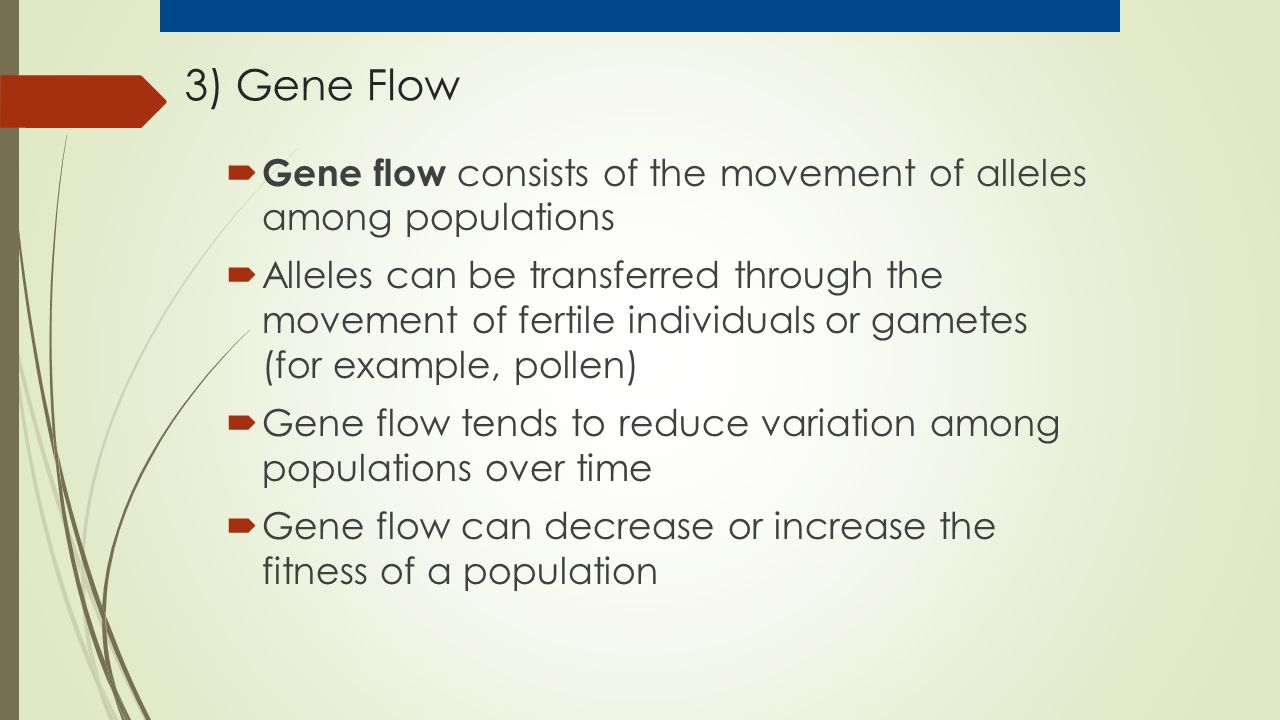 3) Gene Flow  Gene flow consists of the movement of alleles among populations  Alleles can be transferred through the movement of fertile individuals or gametes (for example, pollen)  Gene flow tends to reduce variation among populations over time  Gene flow can decrease or increase the fitness of a population