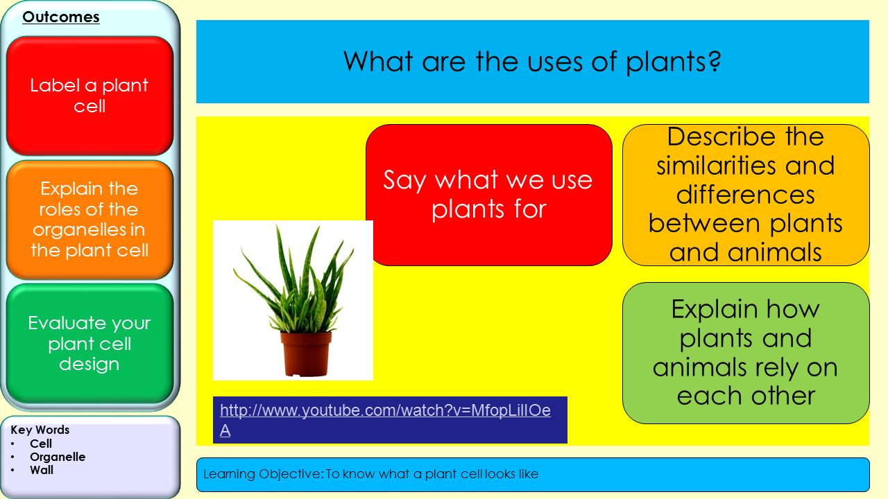 seeing similarities between plants and animals