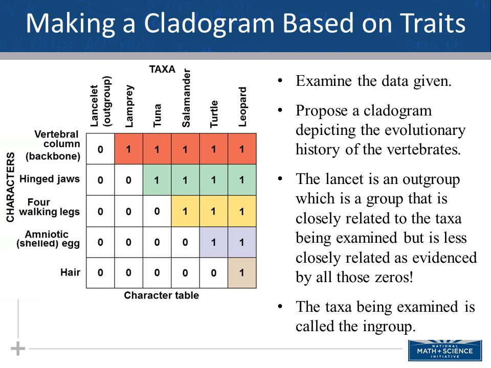 making cladograms essay 54u6 evidence from cladistics has shown that classifications of some groups based on structure did not 54s1 analysis of cladograms to deduce.