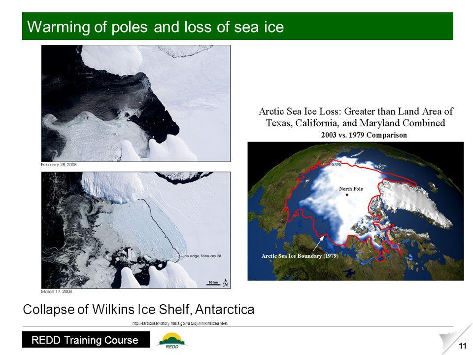 The Wilkins Ice Shelf has begun to disintegrate.