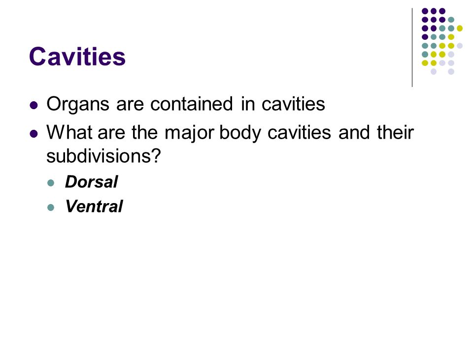 Atractivo Define Anatomy And Physiology And Describe Their ...