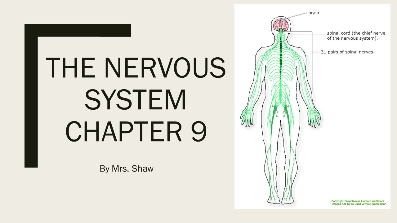 Opening Assignment 1.What are 2 functions of the nervous system? 2 ...
