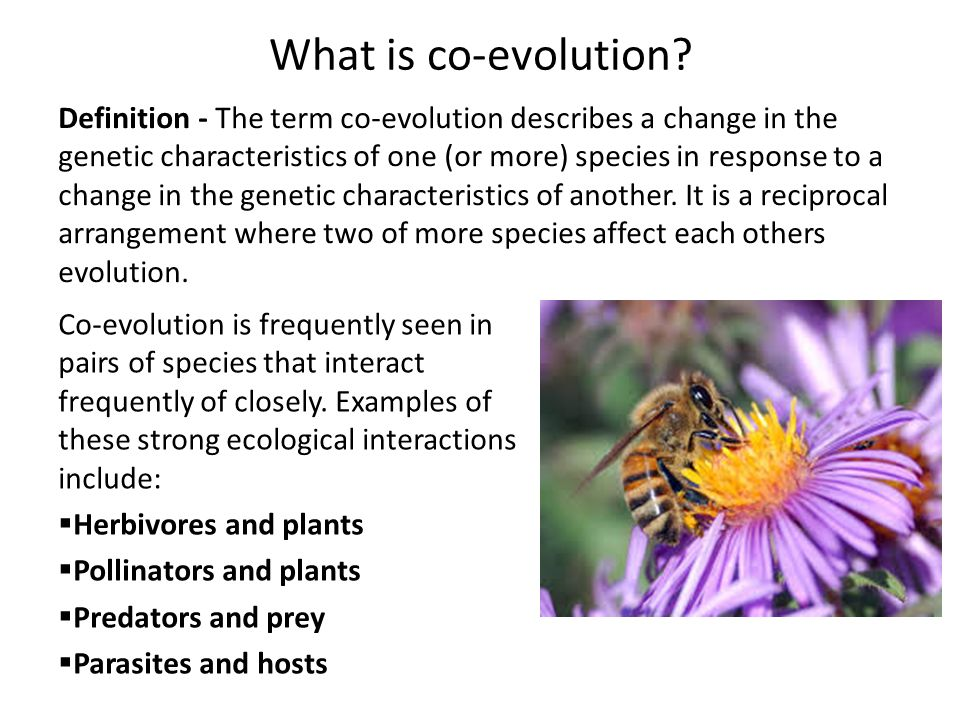 Evolution Co Evolution Of The Red Queen Cfe Advanced Higher Biology