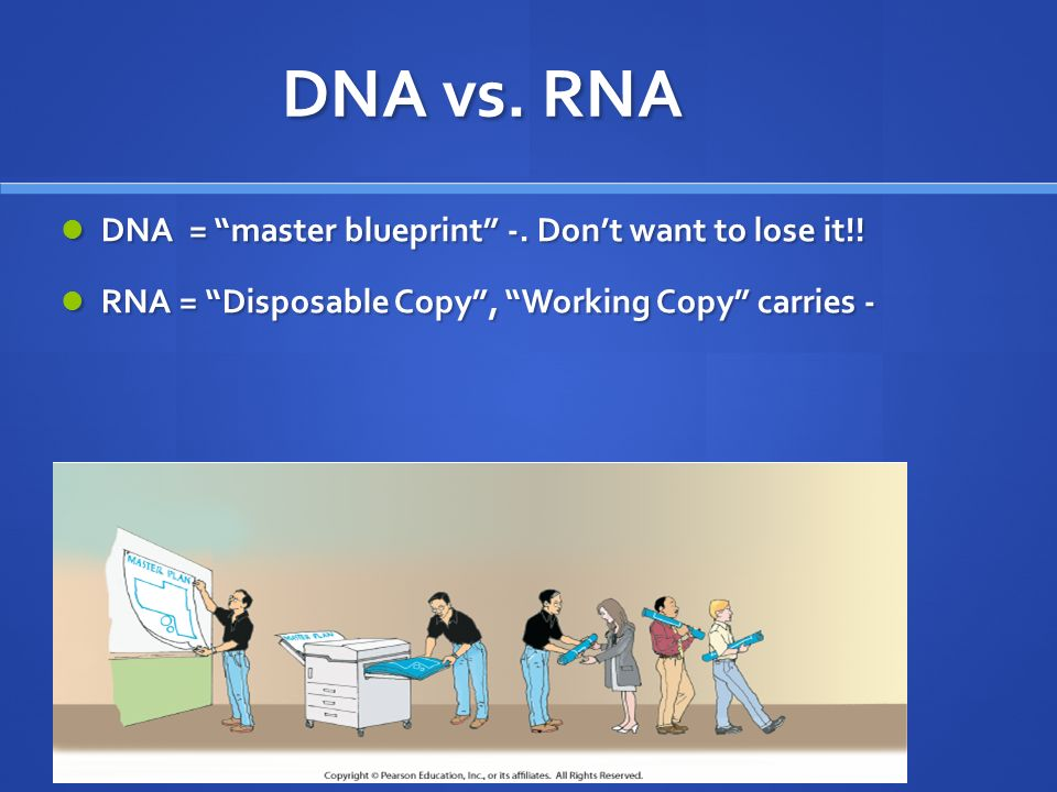 Dna rna and gene expression chapter 14 remember dnas structure dna vs rna dna master blueprint dont want to lose malvernweather Image collections